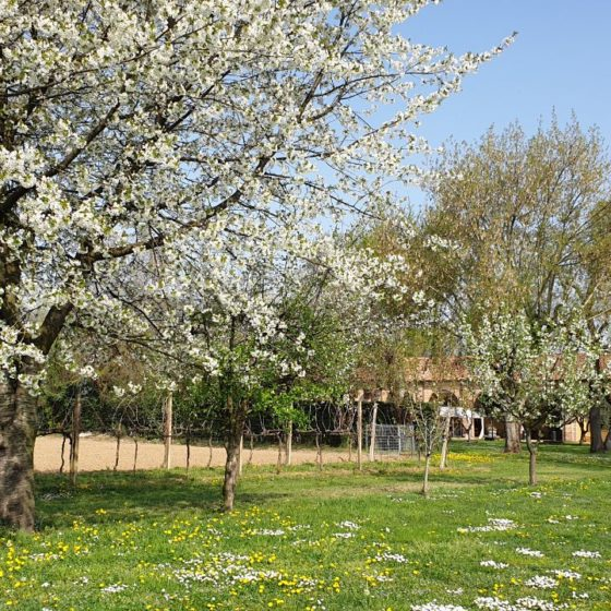 Alberi in fiore e vigneti all'agriturismo Capeeto a Padova